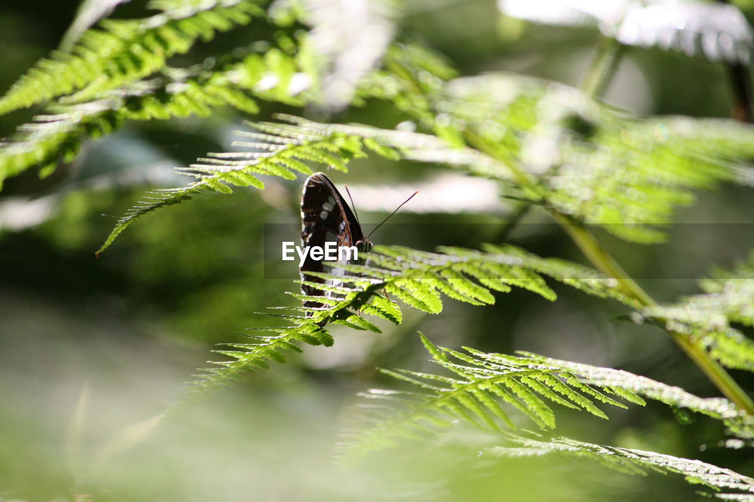 INSECT ON PLANT