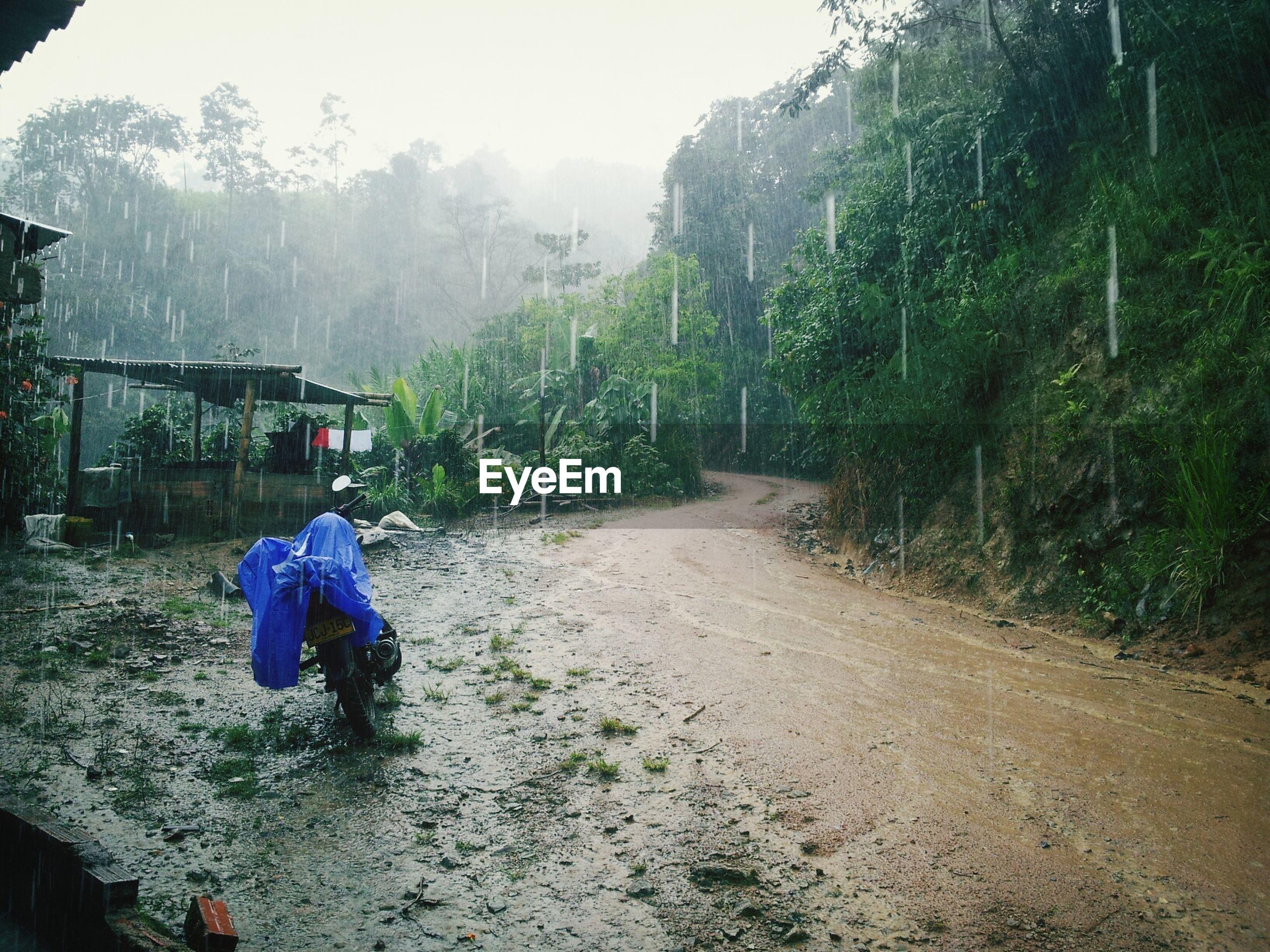 Empty muddy road along plants on a rainy day