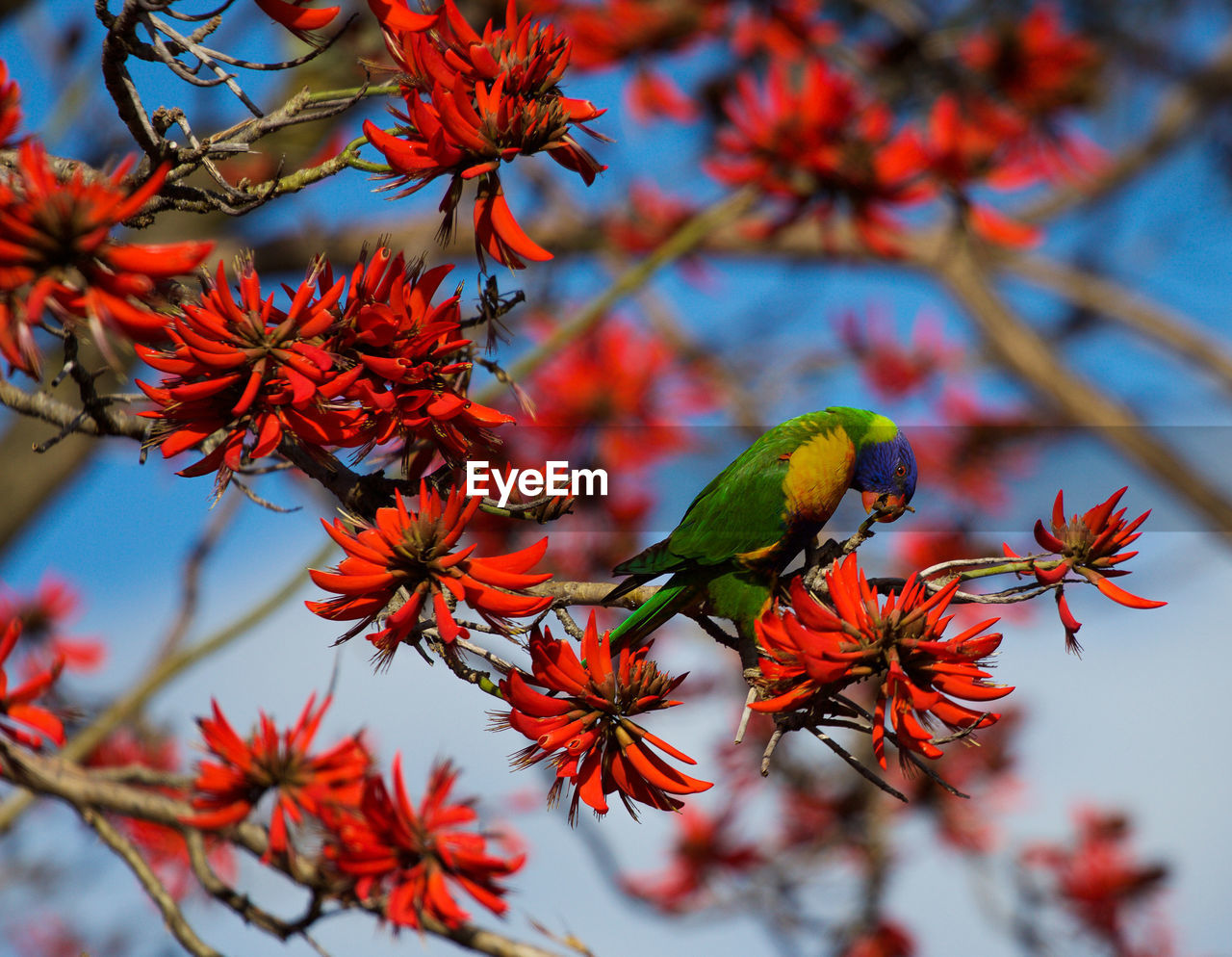 plant, animals in the wild, animal wildlife, animal themes, bird, animal, tree, focus on foreground, beauty in nature, no people, growth, perching, branch, one animal, flower, vertebrate, flowering plant, nature, close-up, day