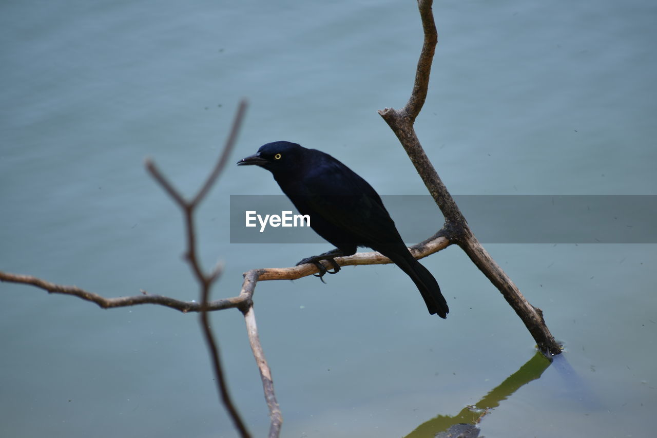 one animal, animals in the wild, animal wildlife, bird, animal themes, water, nature, no people, perching, outdoors, day, lake, beauty in nature, close-up