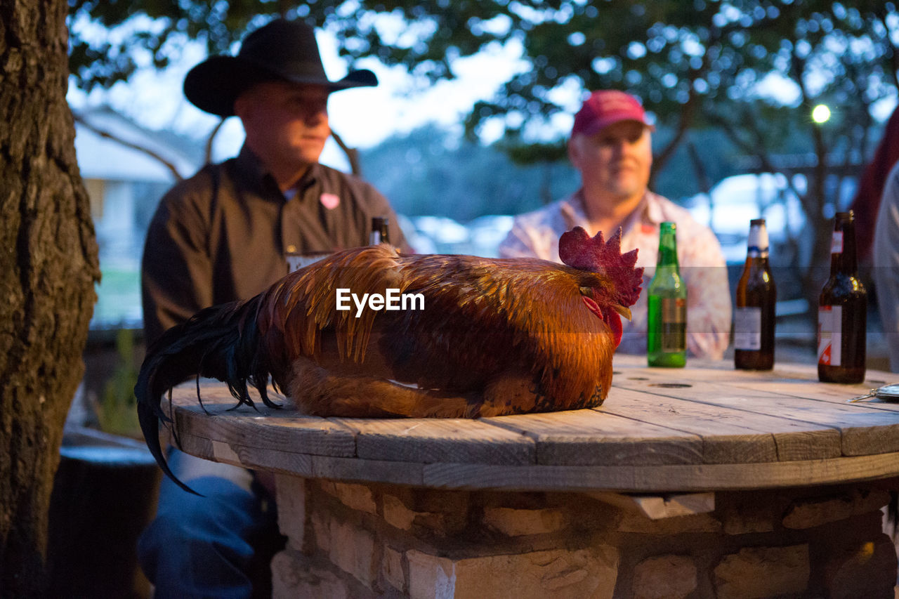 People Sitting At Table With Rooster