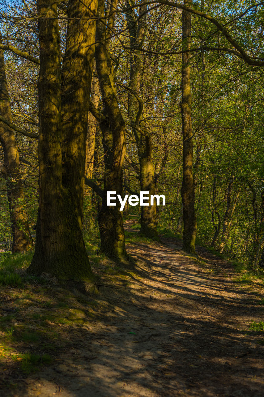 tree, forest, land, plant, nature, woodland, tranquility, beauty in nature, tree trunk, trunk, sunlight, no people, day, growth, tranquil scene, outdoors, non-urban scene, scenics - nature, landscape, shadow, trail