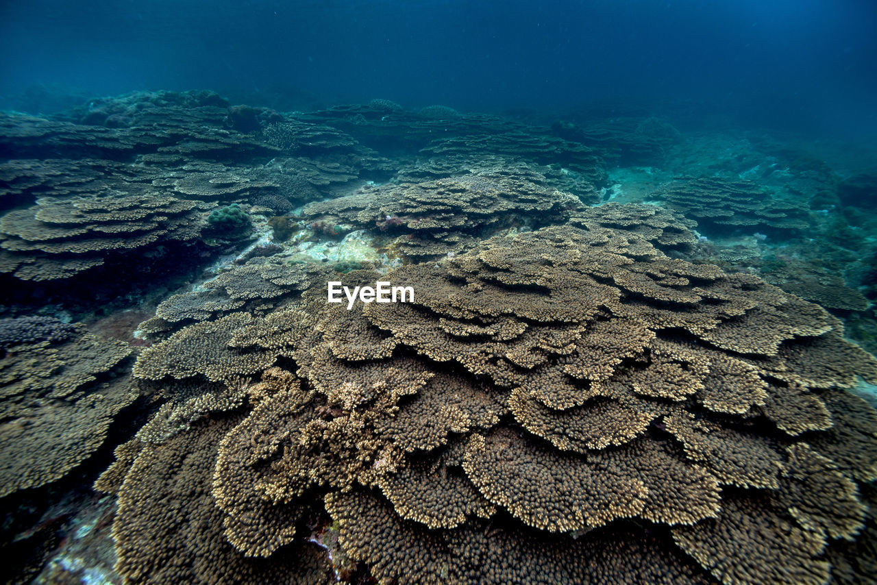 underwater, undersea, coral, sea life, sea, water, animal wildlife, animals in the wild, invertebrate, marine, animal, animal themes, nature, reef, no people, beauty in nature, day, outdoors, ecosystem, clean, purity