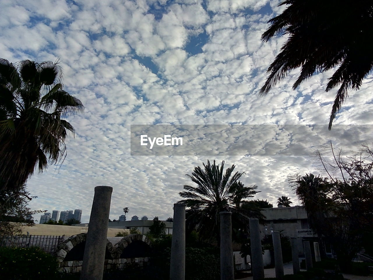 palm tree, tree, low angle view, cloud - sky, sky, built structure, building exterior, architecture, outdoors, no people, growth, day, nature