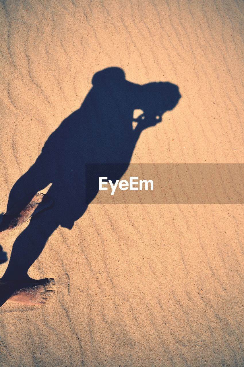 sand, shadow, focus on shadow, high angle view, mammal, real people, one person, silhouette, day, animal themes, domestic animals, sand dune, outdoors, nature, people