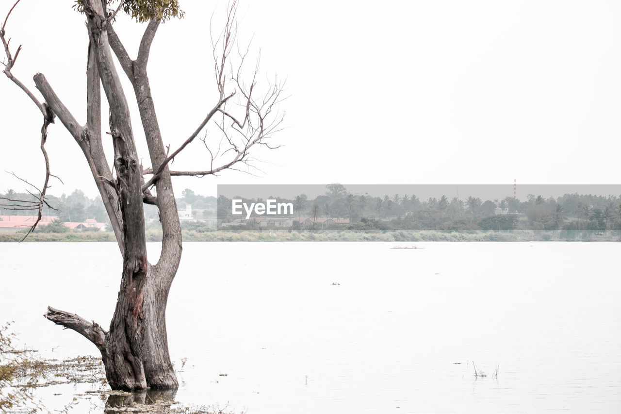tree, tranquility, branch, tree trunk, bare tree, tranquil scene, nature, landscape, lone, outdoors, clear sky, remote, scenics, day, beauty in nature, no people, lake, water, sky, dead tree