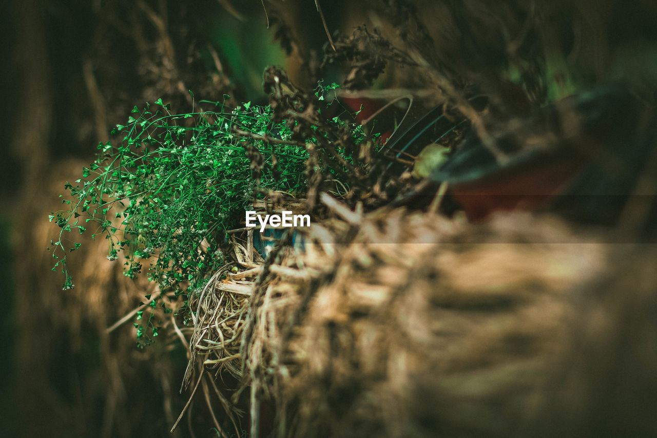 selective focus, no people, green color, close-up, day, outdoors, nature, animal themes
