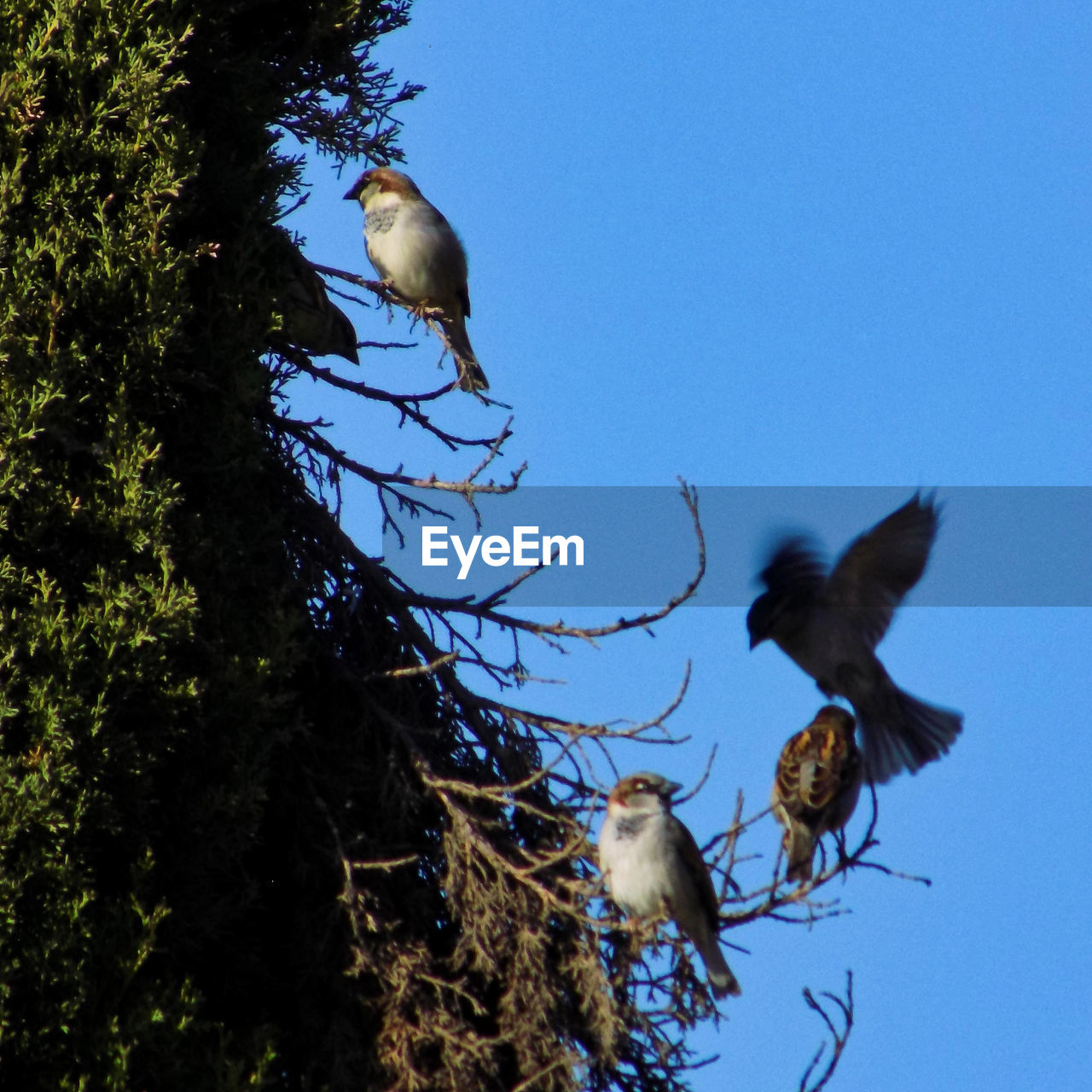 Animal Themes Animal Wildlife Animals In The Wild Beauty In Nature Bird Blue Clear Sky Day Low Angle View Motion Nature No People One Animal Outdoors Perching Sky Spread Wings Tree
