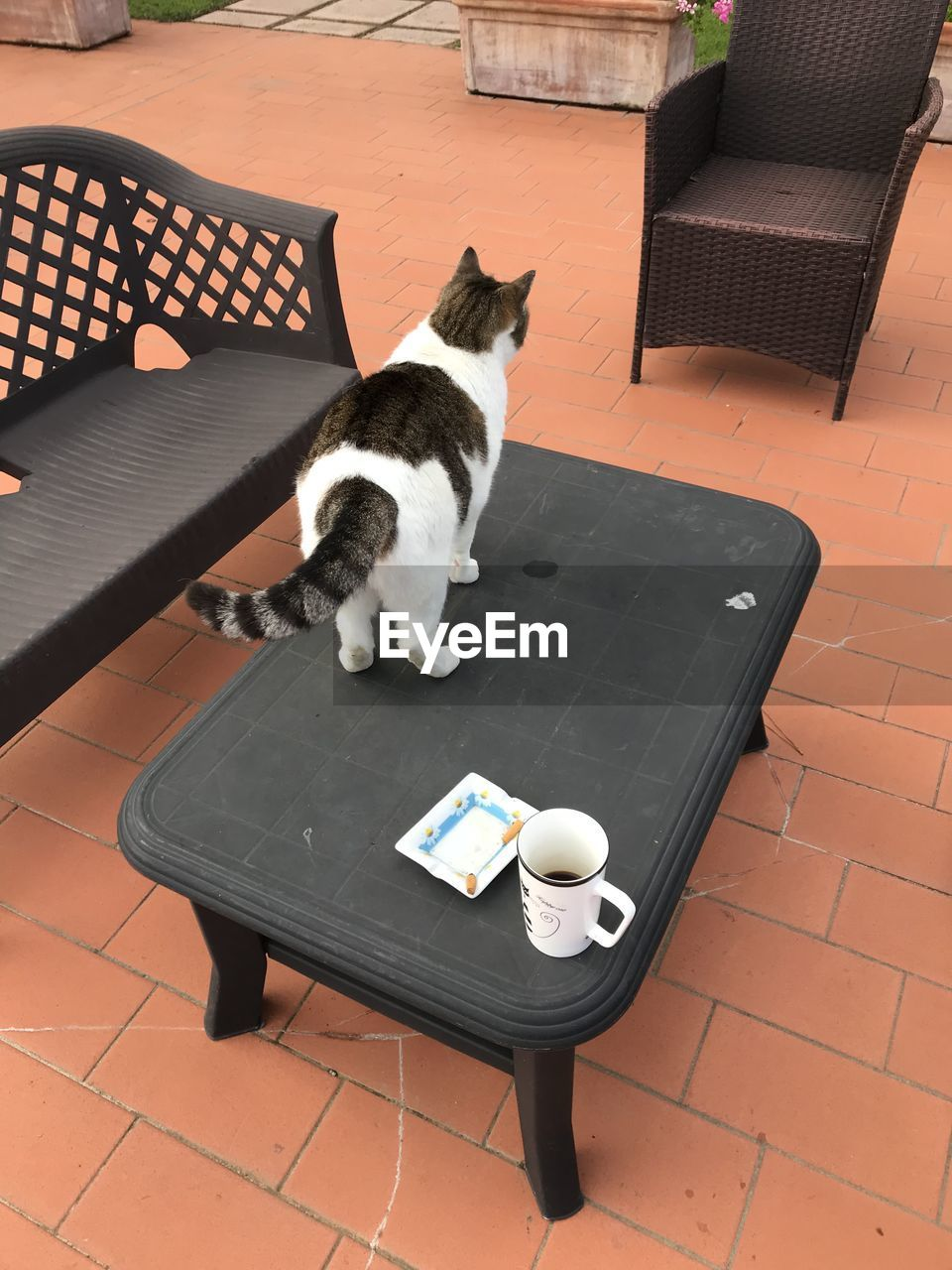 domestic, domestic animals, cat, pets, mammal, domestic cat, animal themes, feline, animal, one animal, vertebrate, table, seat, high angle view, no people, chair, sitting, food and drink, drink, relaxation, tiled floor