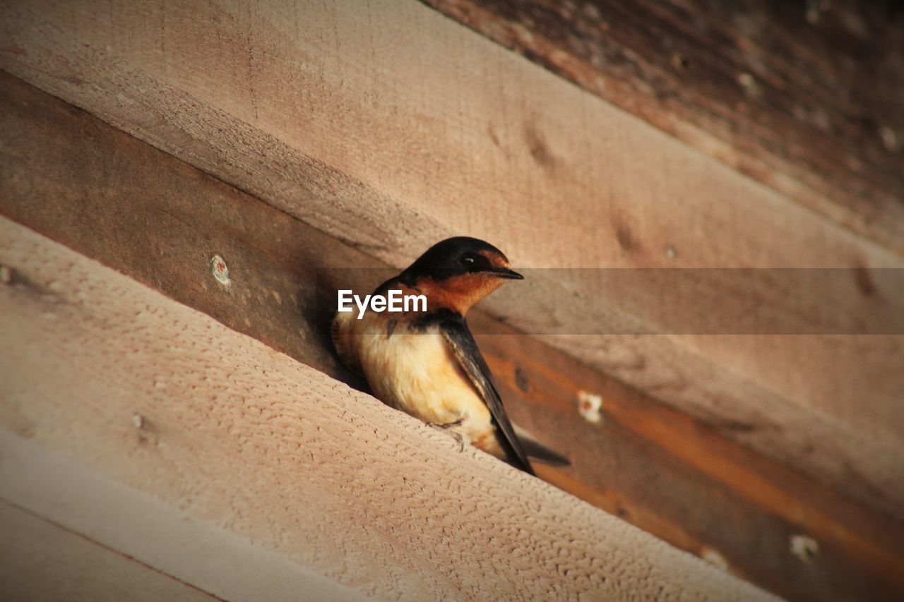 Low angle view of bird on wooden plank