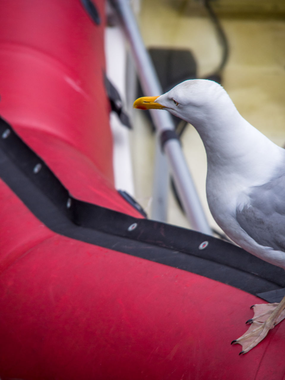 red, bird, one animal, animals in the wild, animal themes, animal wildlife, day, no people, outdoors, close-up, nature