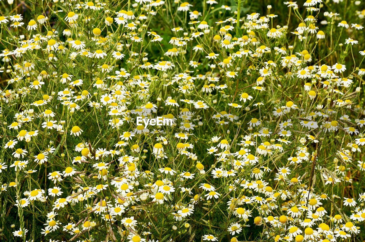 growth, nature, flower, plant, green color, beauty in nature, yellow, freshness, outdoors, leaf, day, no people, sunlight, summer, backgrounds, fragility, blooming, flower head