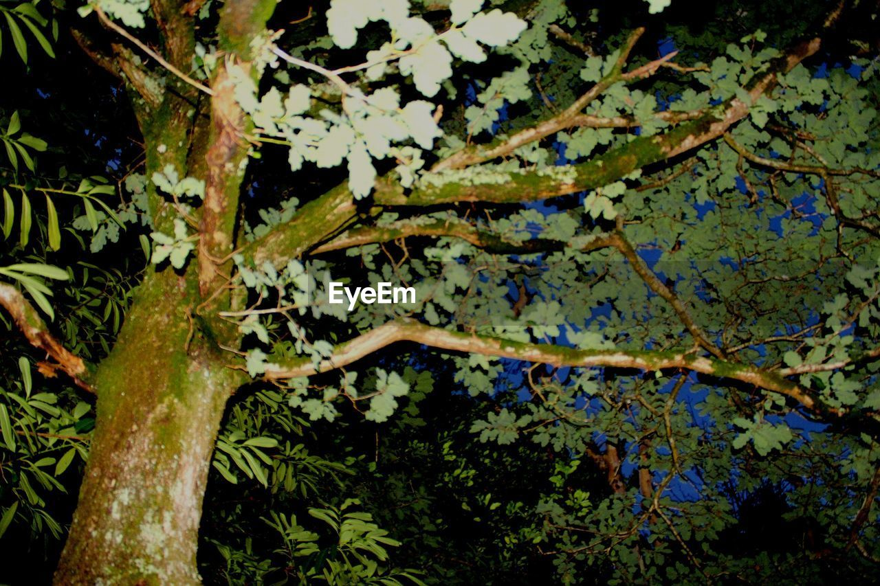 tree, growth, nature, branch, no people, outdoors, tree trunk, close-up, day, beauty in nature