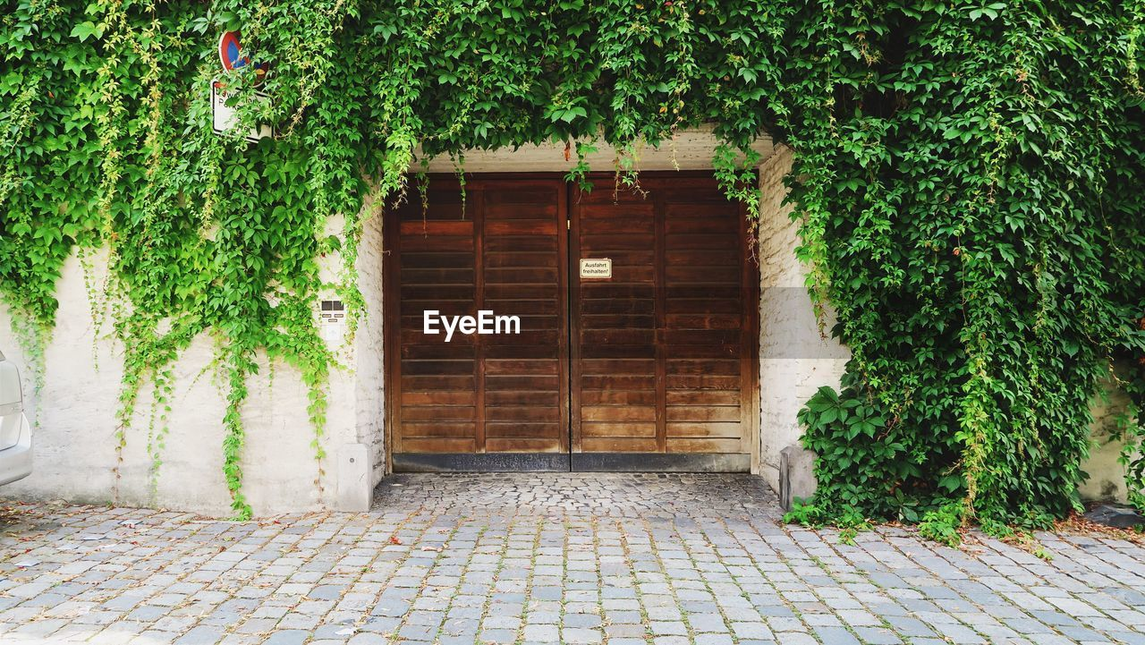 IVY ON BUILDING