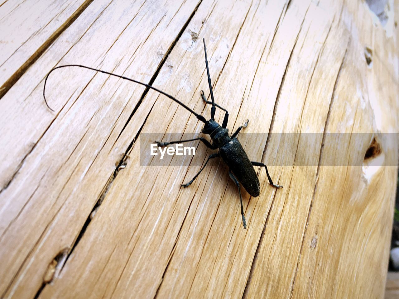 one animal, animal themes, insect, wood - material, animals in the wild, animal wildlife, close-up, no people, day, outdoors, nature