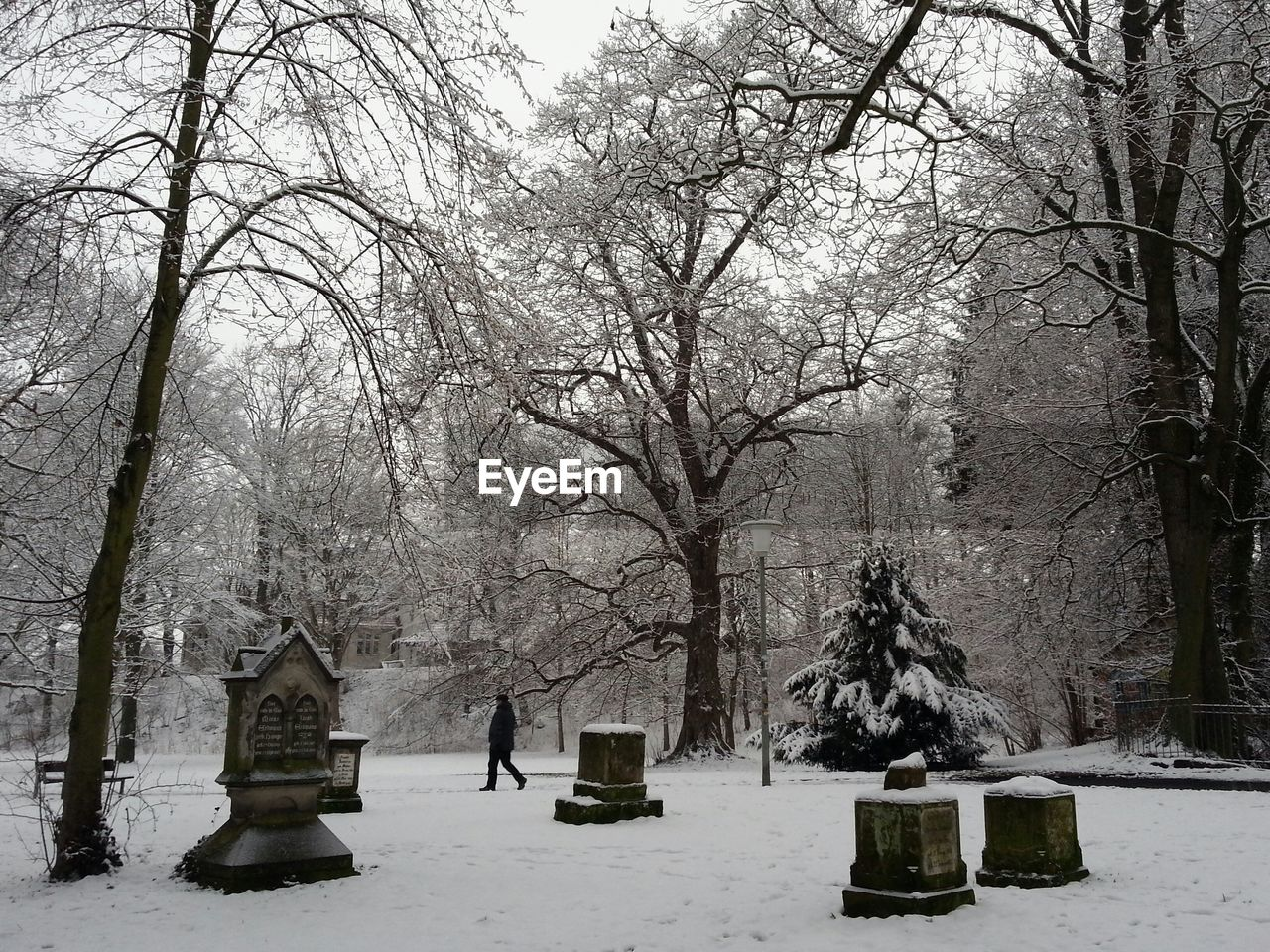 Bare trees on snow covered park