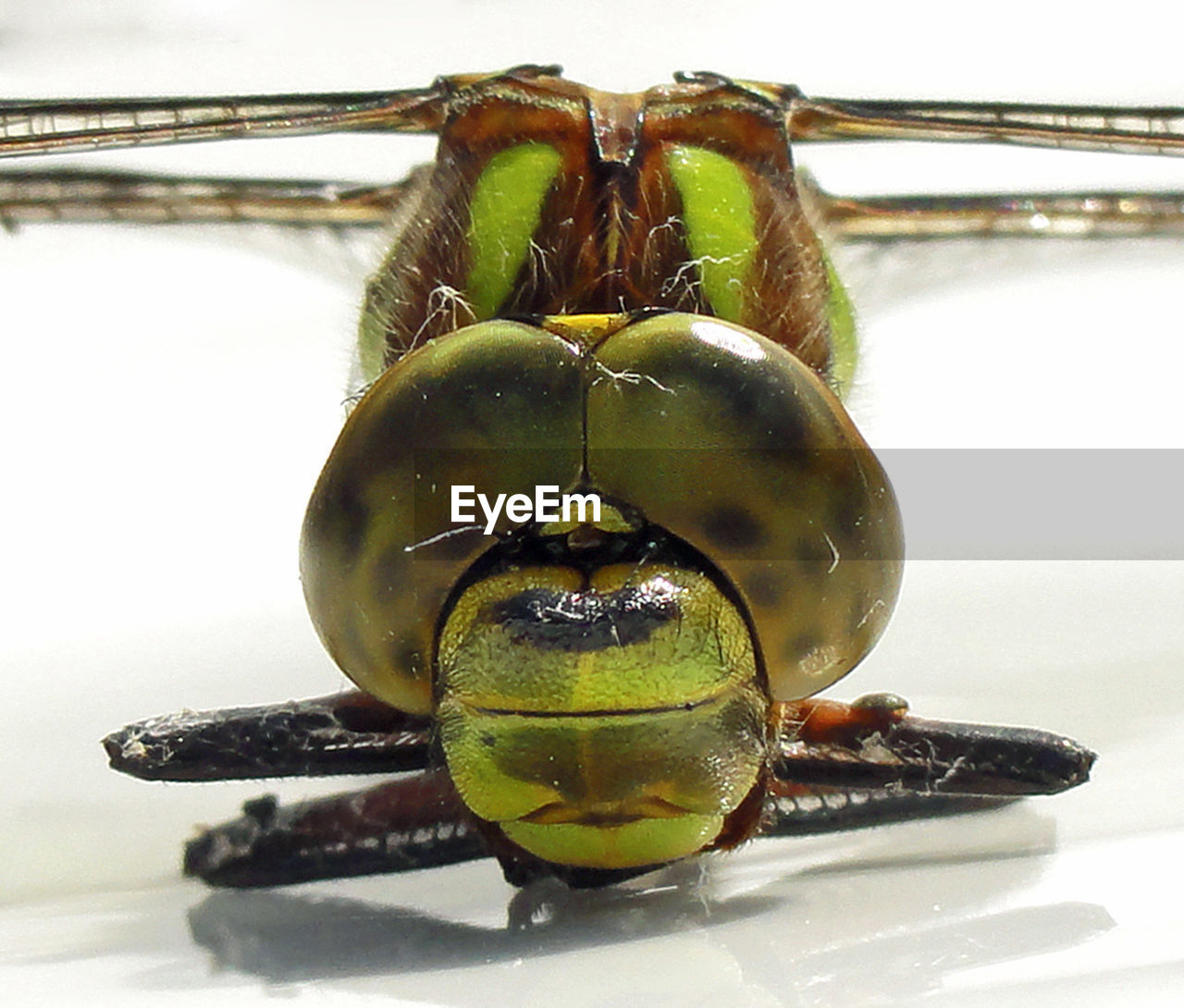 Close-Up Of Dragonfly On Table