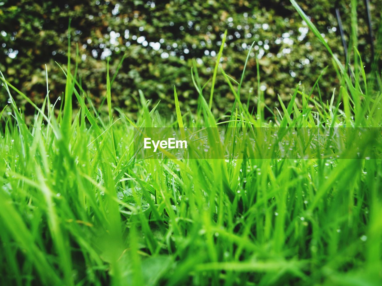plant, green color, grass, growth, selective focus, nature, beauty in nature, land, field, blade of grass, day, no people, tranquility, lush foliage, foliage, close-up, outdoors, wet, backgrounds, freshness, dew, surface level, spring, raindrop