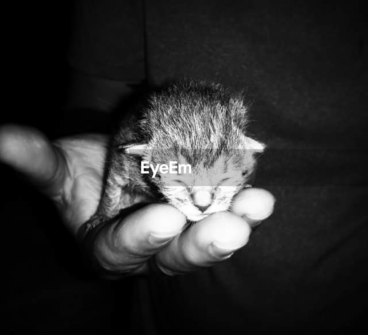 human hand, human body part, holding, cute, one person, real people, indoors, animal themes, domestic animals, love, one animal, young animal, pets, mammal, care, newborn, hedgehog, close-up, fragility, day, people