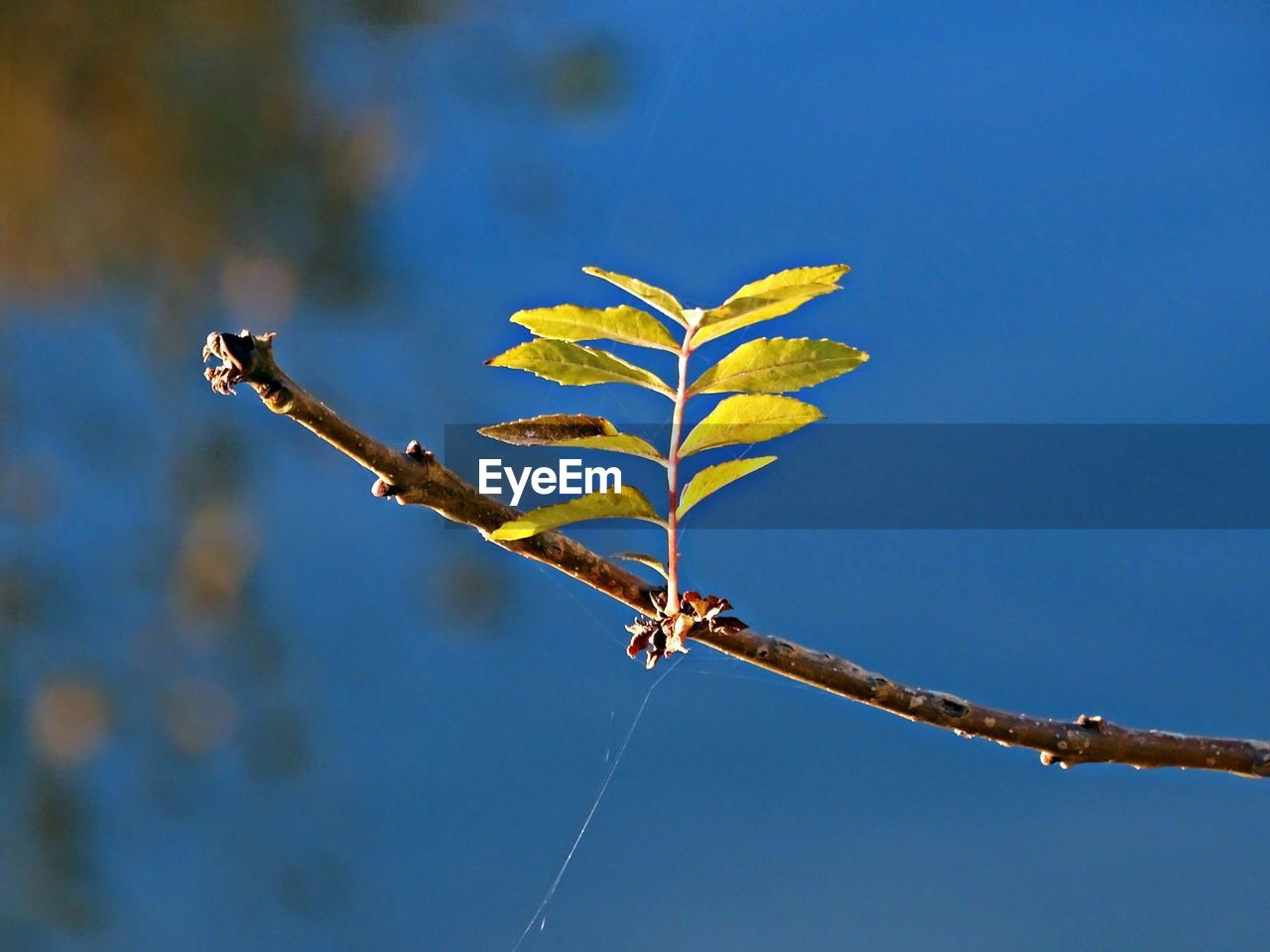 nature, day, outdoors, leaf, no people, low angle view, blue, autumn, close-up, beauty in nature, sky, animal themes