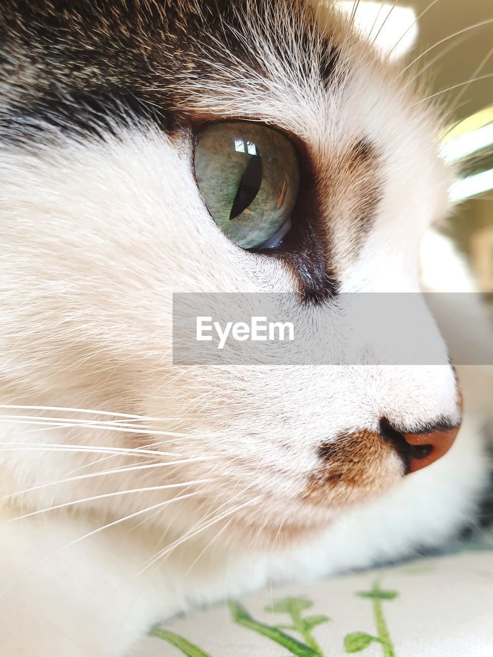 pets, domestic animals, mammal, domestic, one animal, animal themes, animal, vertebrate, close-up, animal body part, cat, feline, animal head, domestic cat, looking away, looking, whisker, no people, animal eye, day, snout, animal nose, animal mouth