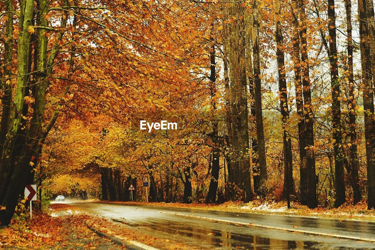 Wet Road Amidst Trees During Autumn