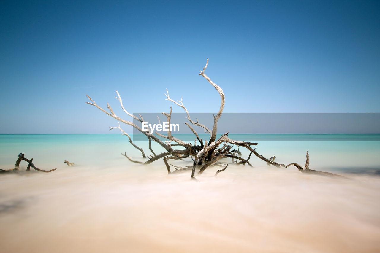 Dead Tree On Beach Against Clear Blue Sky