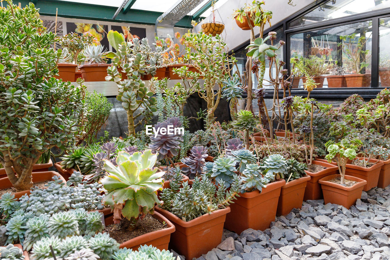 flower, flowering plant, plant, variation, growth, potted plant, choice, beauty in nature, nature, no people, retail, day, freshness, vulnerability, large group of objects, architecture, fragility, arrangement, for sale, botany, outdoors, flower pot, flower head, retail display, gardening