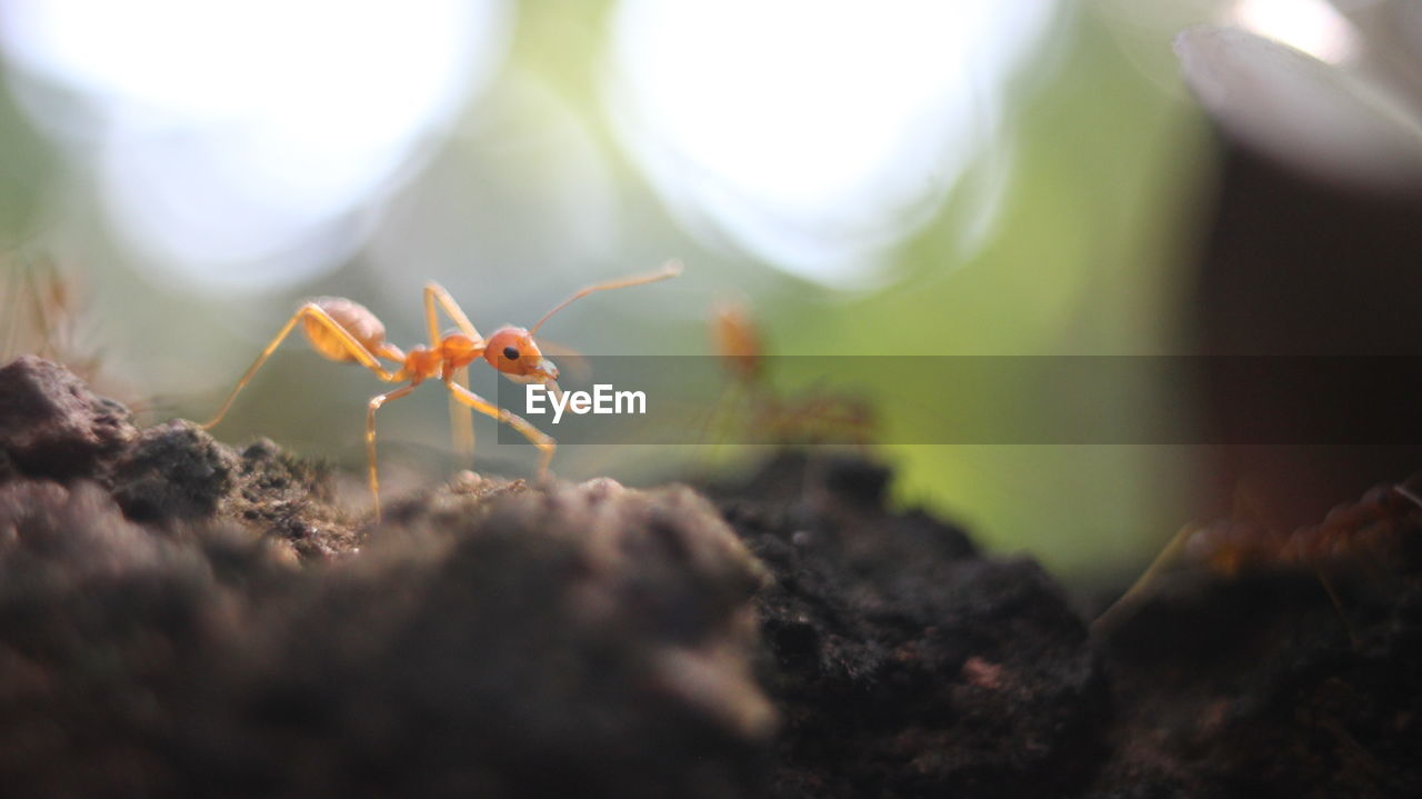 Close-Up Surface Level Of An Ant