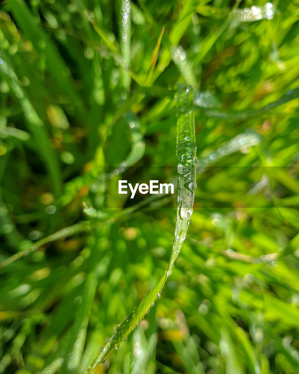 green color, plant, growth, water, drop, close-up, beauty in nature, nature, day, no people, wet, selective focus, freshness, plant part, leaf, focus on foreground, outdoors, green, fragility, blade of grass, dew, purity, raindrop