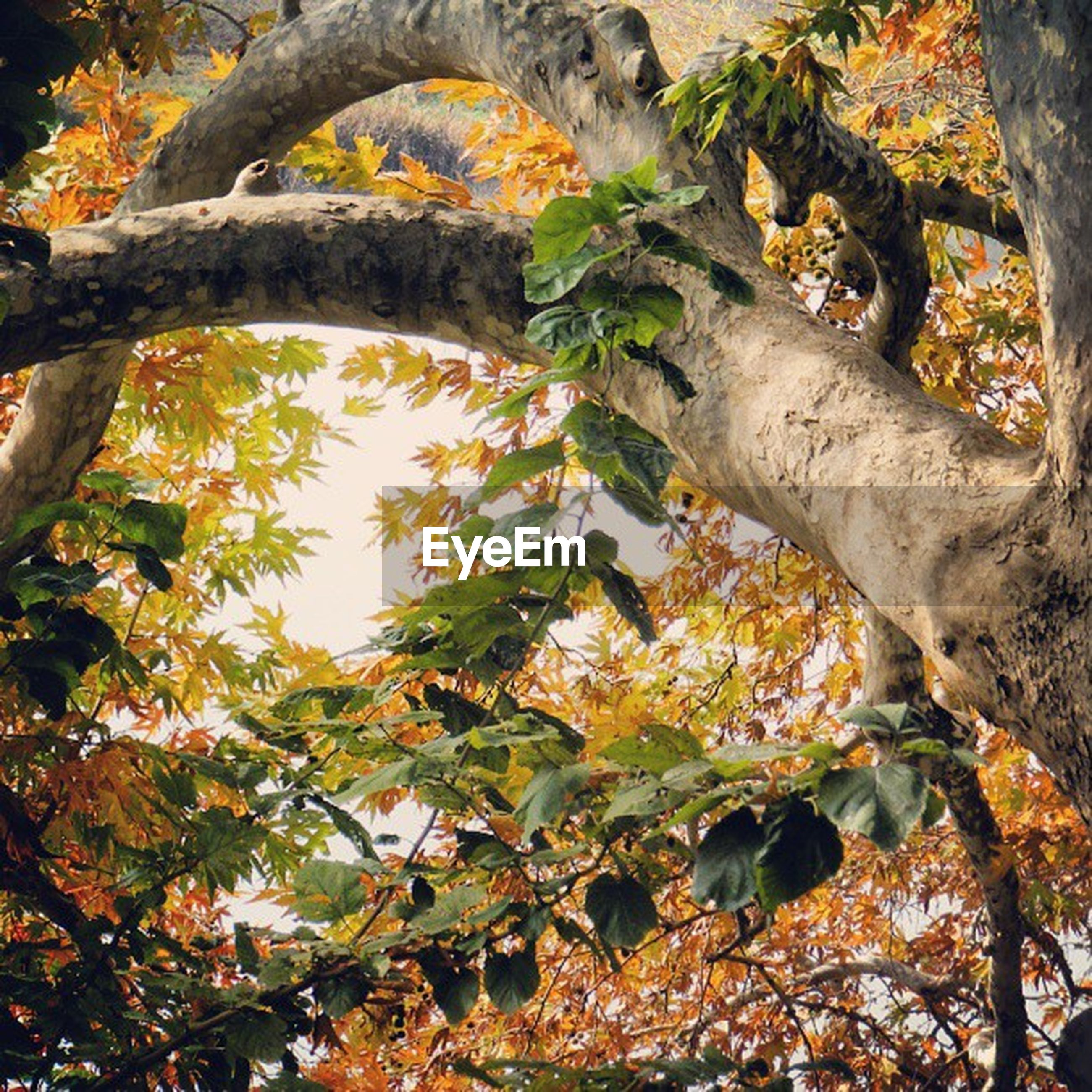 tree, branch, low angle view, autumn, growth, leaf, change, nature, beauty in nature, tranquility, season, tree trunk, yellow, day, sky, scenics, no people, sunlight, outdoors, tranquil scene