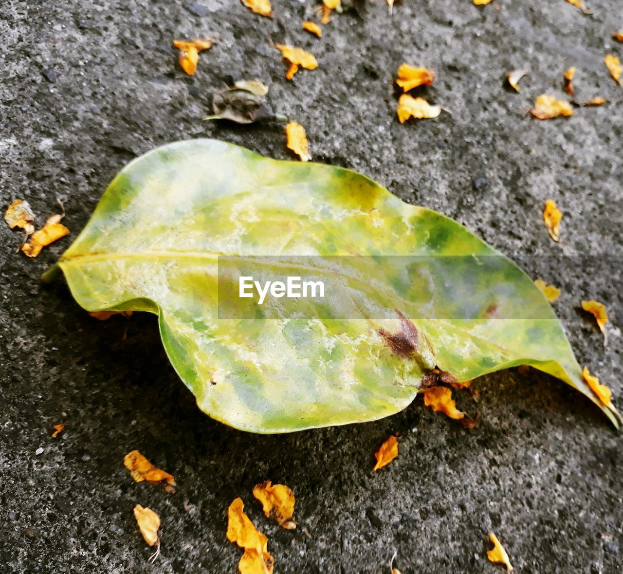 leaf, close-up, green color, high angle view, outdoors, no people, day, nature, growth, fragility, freshness, food, flower