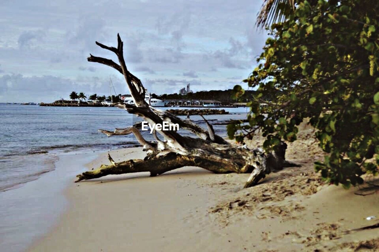 tree, nature, sea, outdoors, day, no people, tranquility, beach, water, scenics, branch, beauty in nature, sky