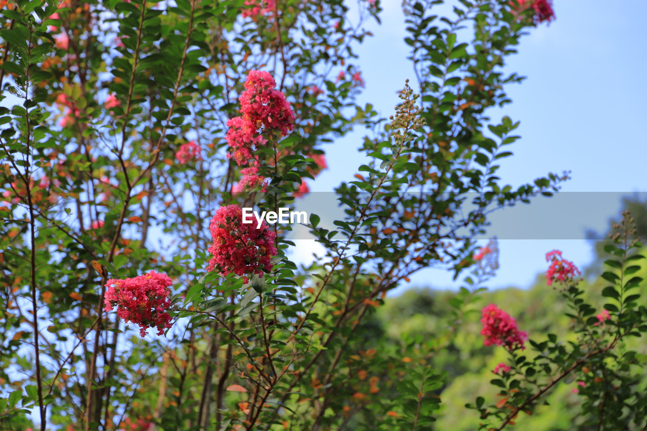 Low angle view of flowering plants against trees
