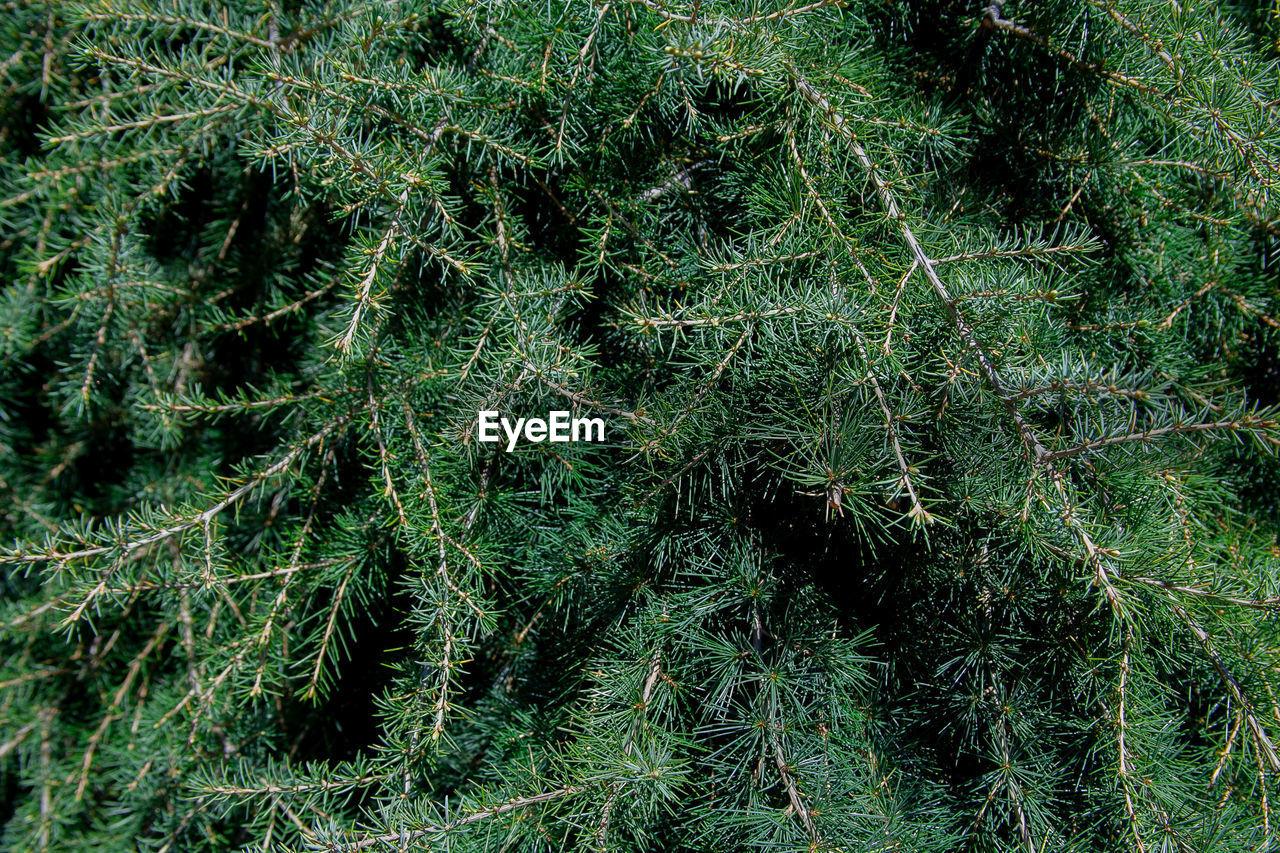 FULL FRAME SHOT OF TREES GROWING ON FIELD