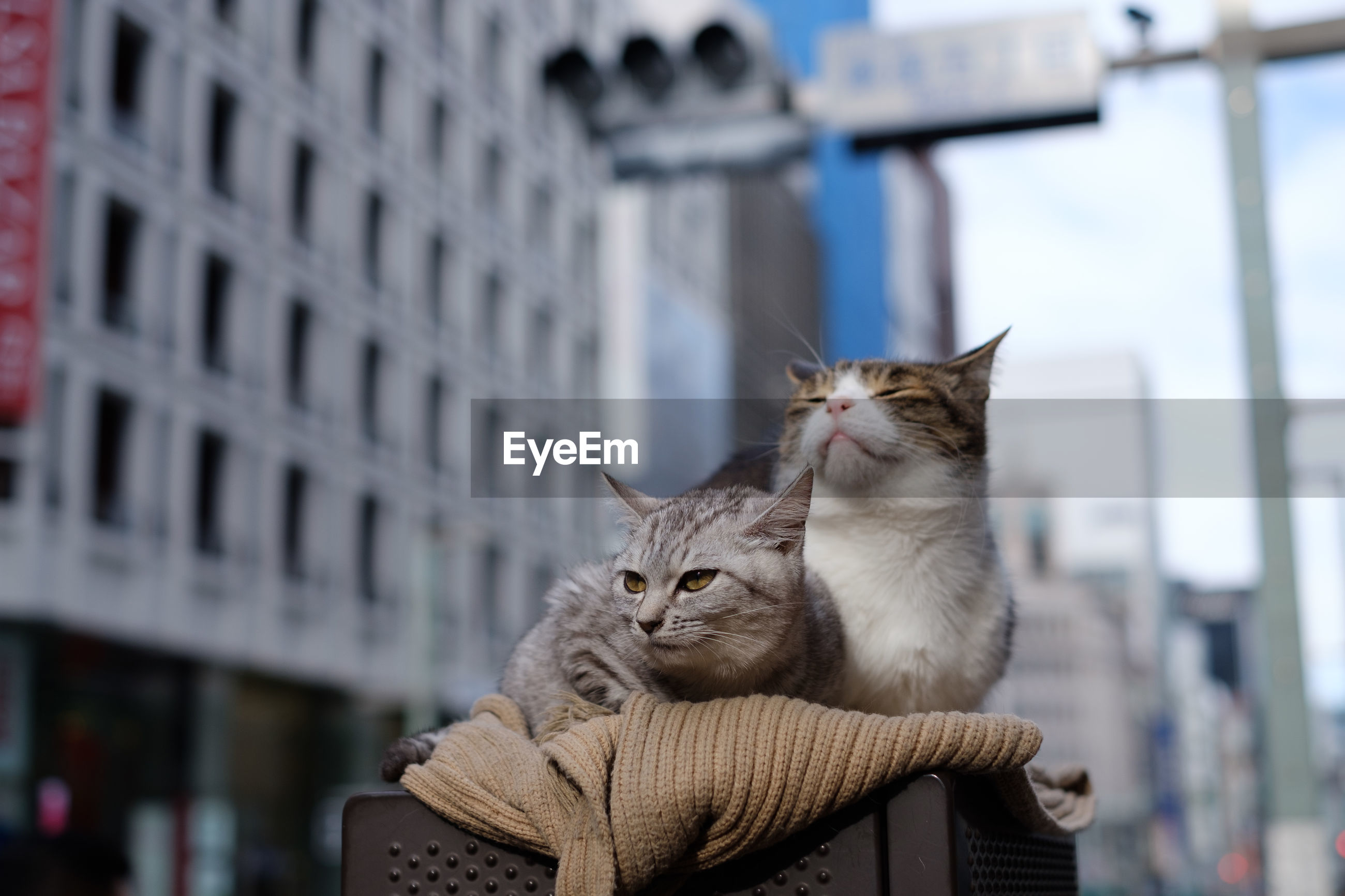 Close-up of cats on table against buildings in city