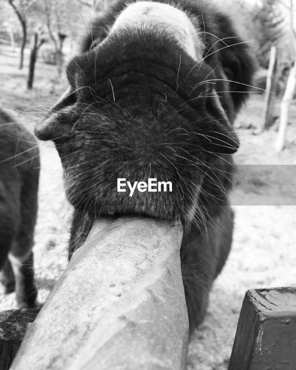 Close-Up Of Animal Eating Wood