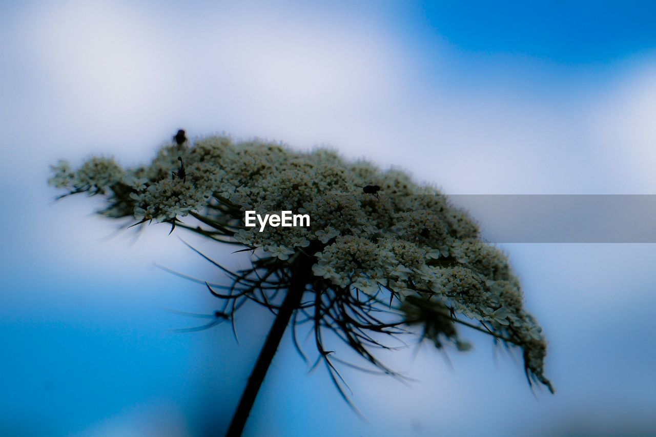 nature, blue, no people, sky, close-up, day, plant, beauty in nature, growth, tree, outdoors