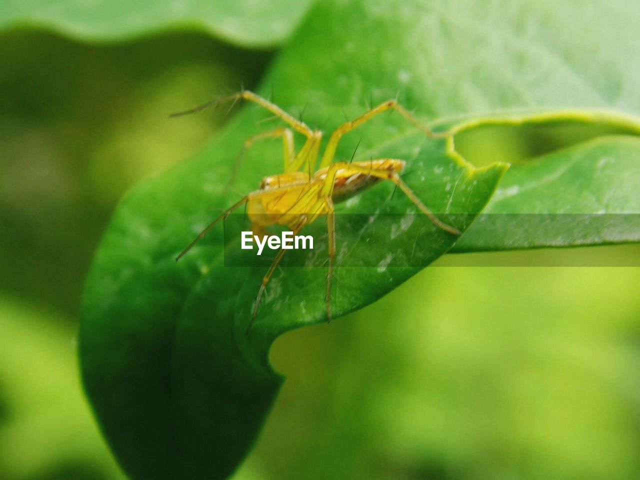 insect, green color, leaf, one animal, animals in the wild, animal themes, nature, close-up, no people, plant, growth, outdoors, animal wildlife, focus on foreground, day, beauty in nature