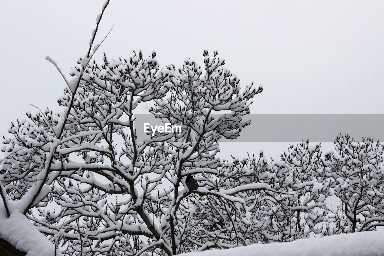 nature, clear sky, winter, tranquility, beauty in nature, snow, cold temperature, tree, no people, day, scenics, outdoors, sky, landscape, branch, close-up
