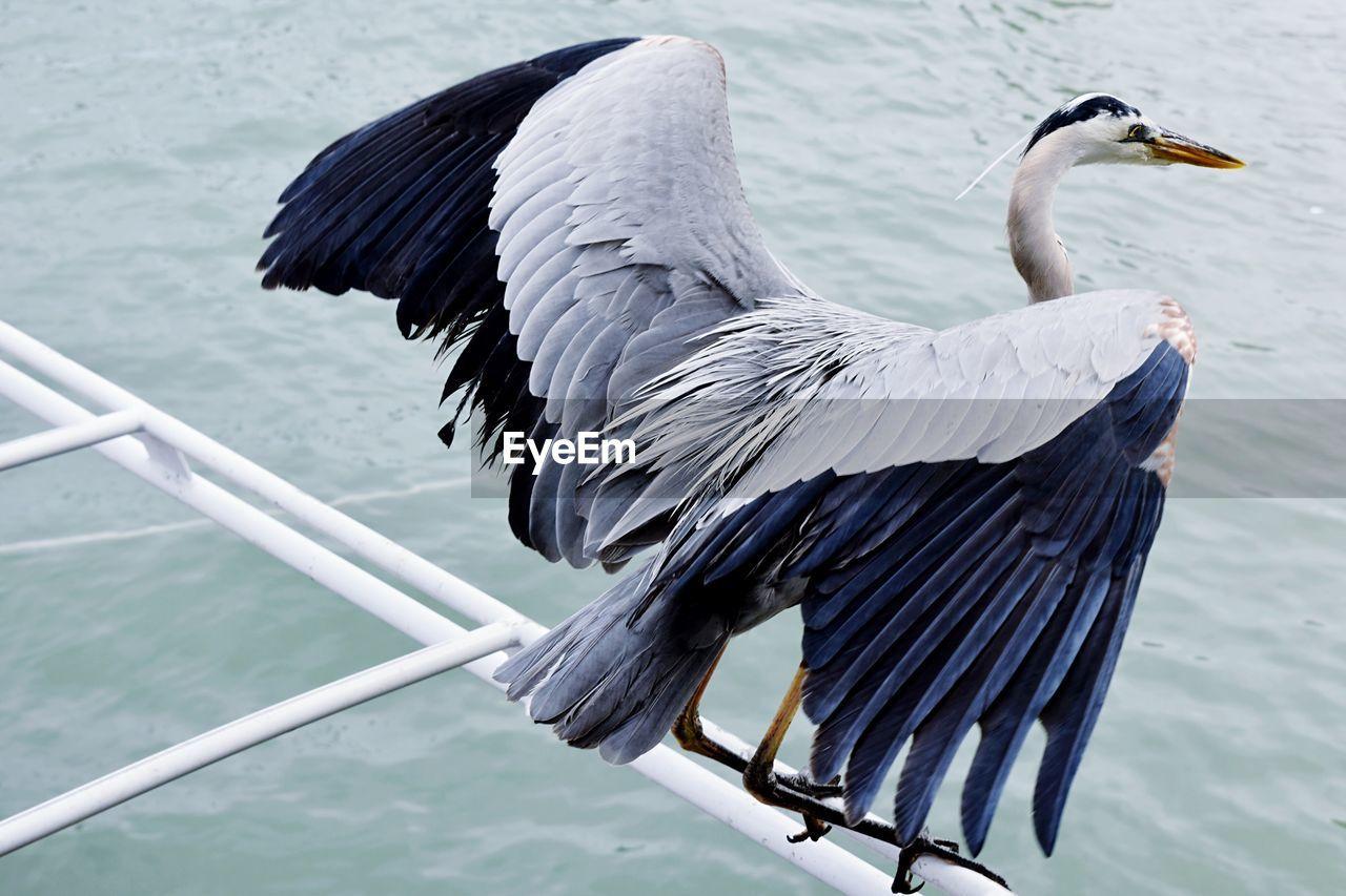 Gray Heron Perching Over River