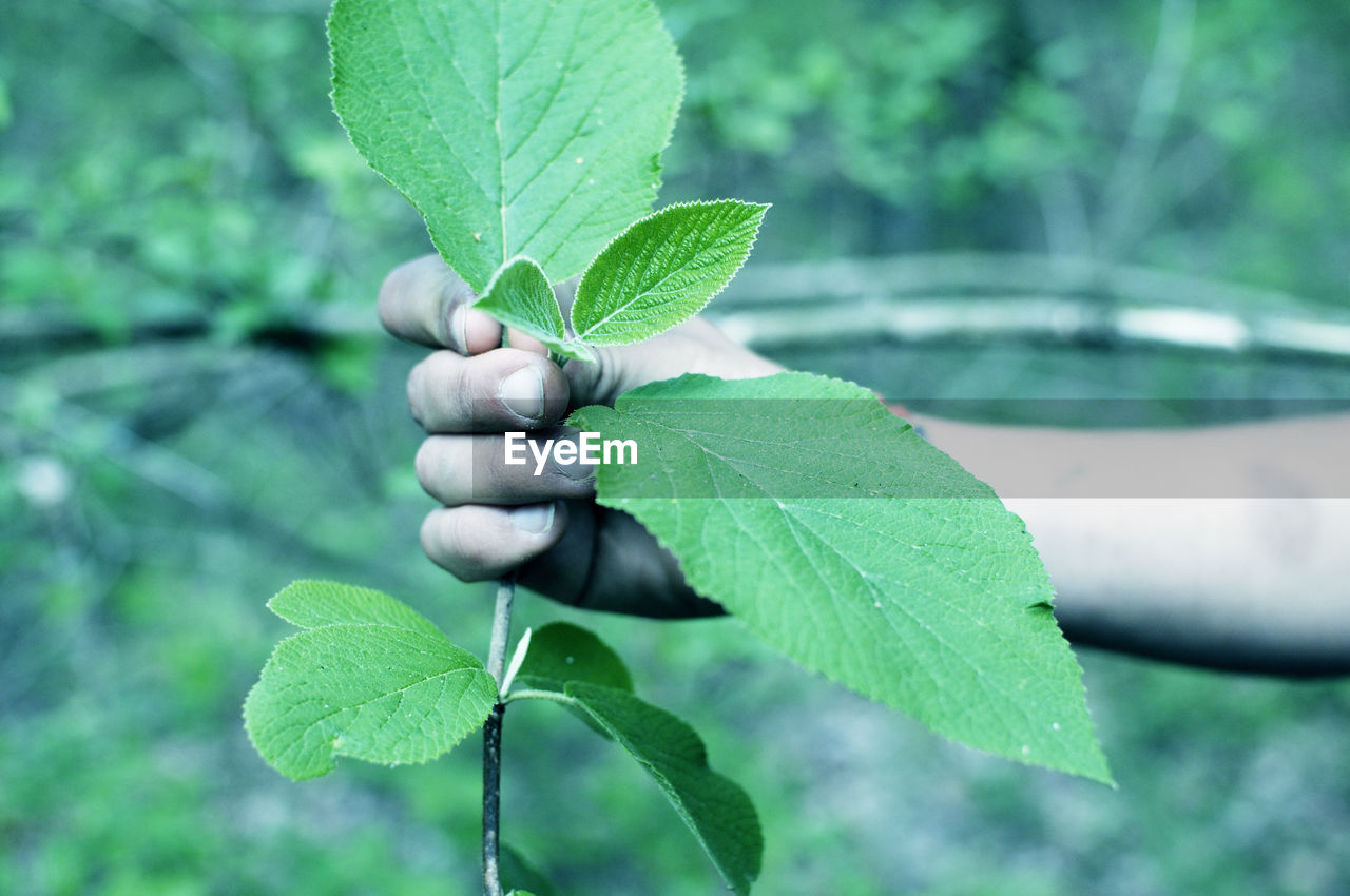 leaf, plant part, green color, plant, growth, nature, close-up, beauty in nature, focus on foreground, day, leaf vein, freshness, outdoors, water, selective focus, leaves, no people, vulnerability, tree