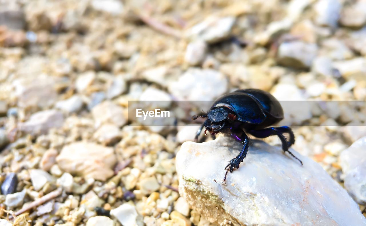 animal, animal themes, animals in the wild, animal wildlife, one animal, invertebrate, insect, solid, close-up, beetle, rock, day, no people, stone - object, nature, rock - object, focus on foreground, outdoors, zoology, high angle view, pebble, marine