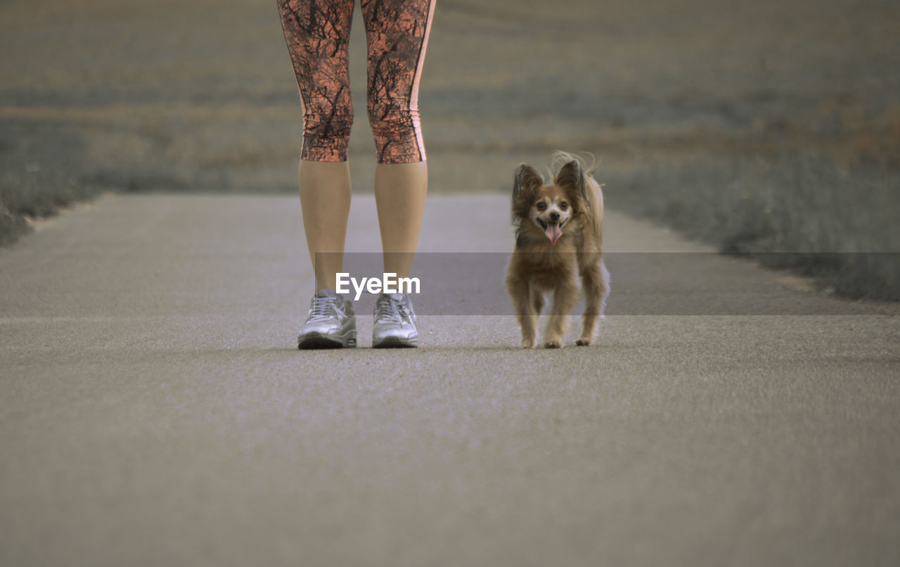 Low Section Of Woman With Dog Standing On Road