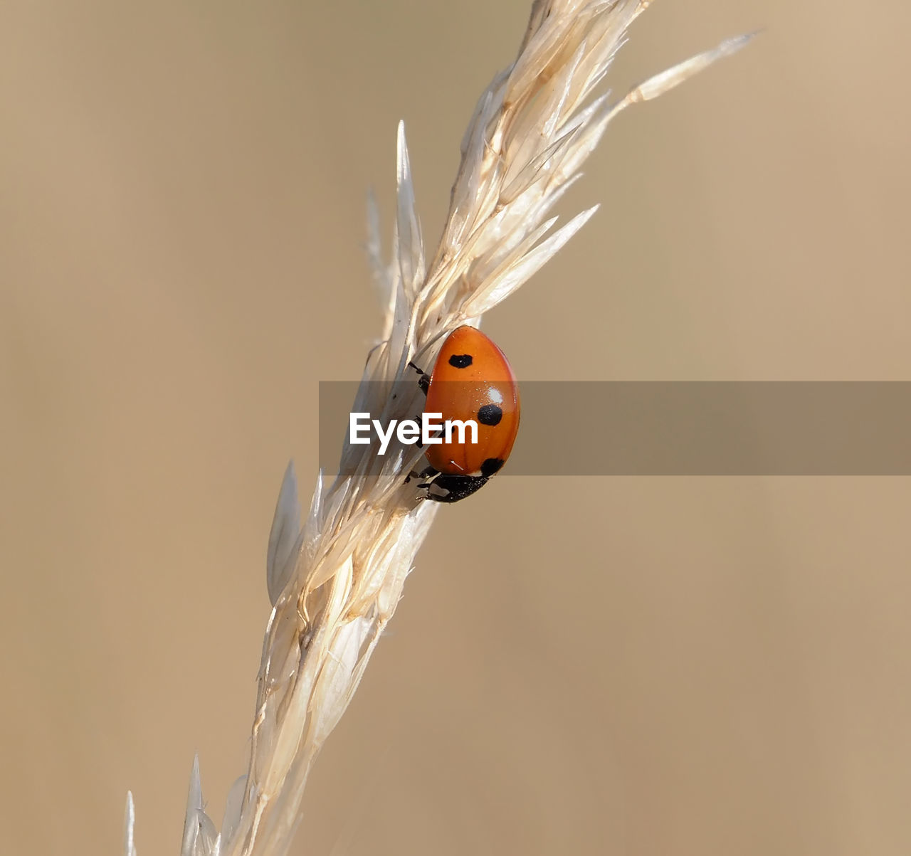 ladybug, beetle, one animal, animal wildlife, animal themes, animal, animals in the wild, insect, close-up, invertebrate, focus on foreground, nature, plant, no people, spotted, day, outdoors, copy space, red, crop, small