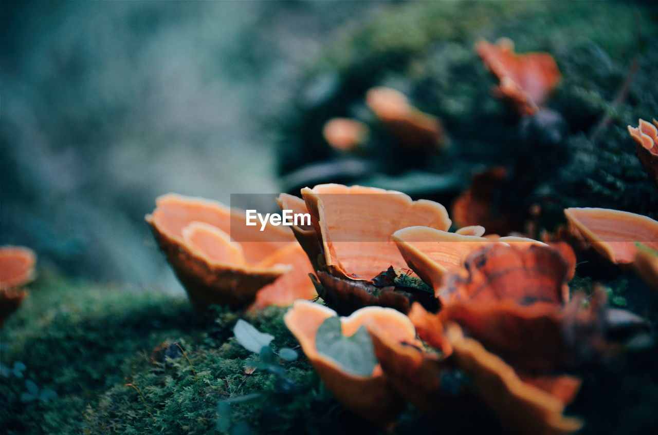 Close-Up Of Mushrooms Growing On Moss Covered Rock