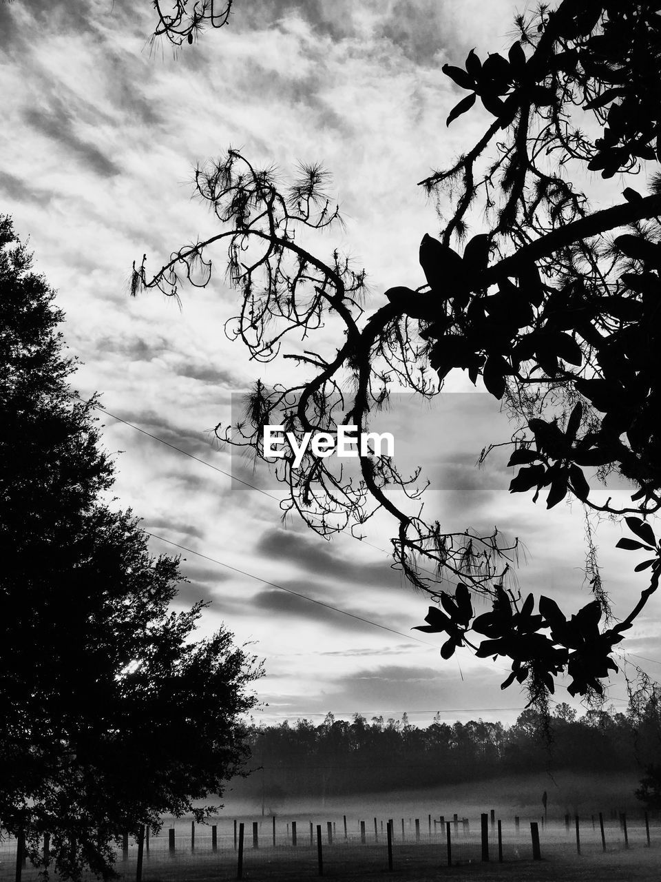 tree, sky, cloud - sky, nature, beauty in nature, tranquility, silhouette, outdoors, low angle view, no people, tranquil scene, branch, day, growth, scenics, bare tree, landscape