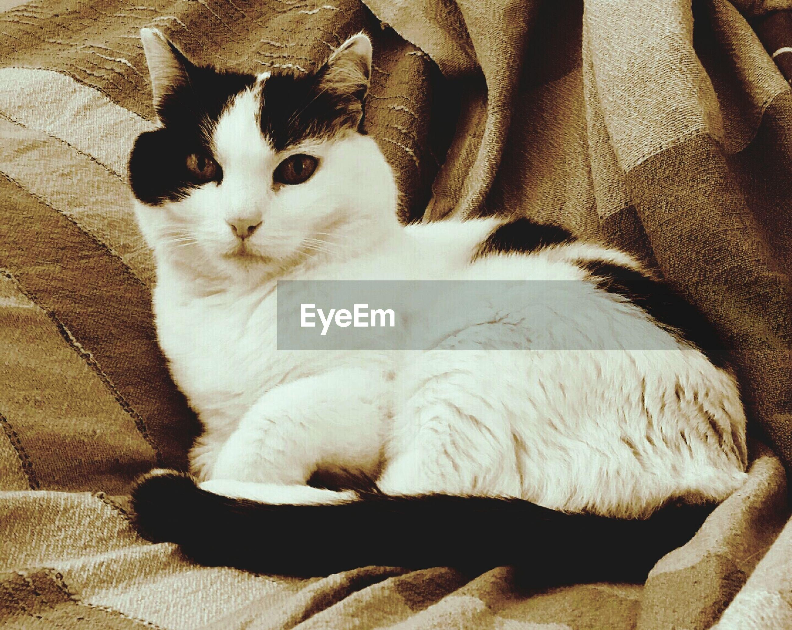 Cat lying in blanket