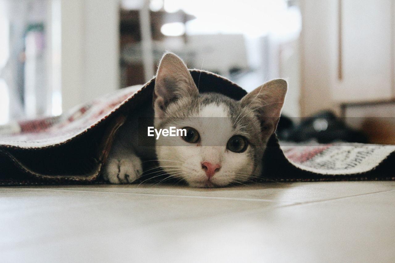 PORTRAIT OF CAT LYING ON FLOOR
