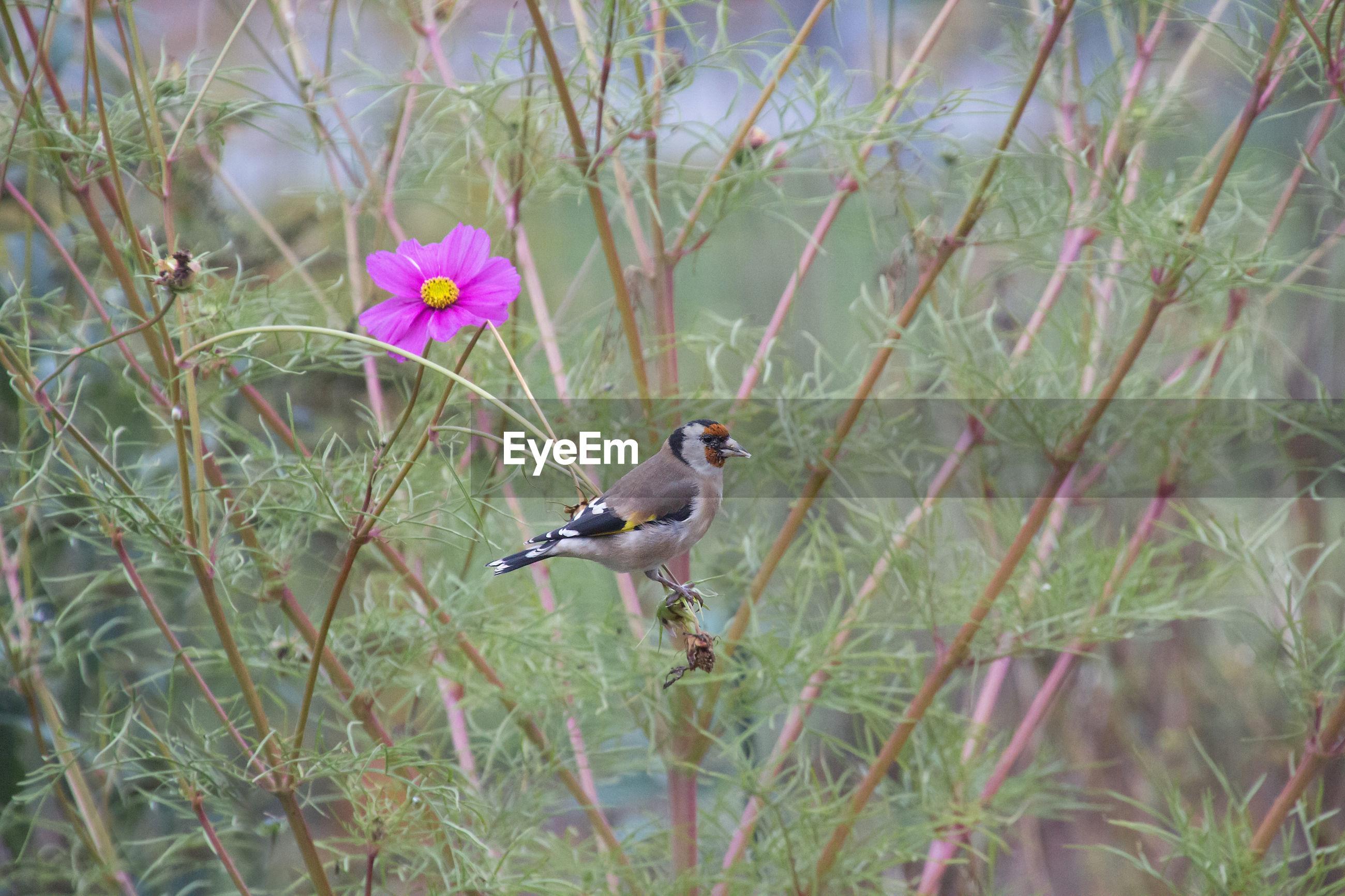 BIRD PERCHING ON FLOWER